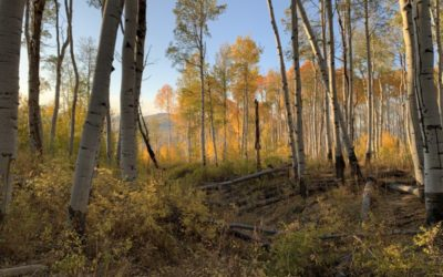 Judge Rules Against Forest Service, Coal Mine Expansion in Gunnison County